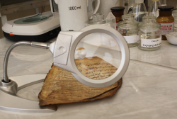 In 2019 more than 12 500 sheets were restored in the Restoration Lab